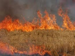 جمبر: اچانک آگ لگنے سے لاکھوں روپے کی بیس ایکڑ گندم جل کر خاکستر ہوگئی